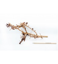 Scaping Twigs M 35-45cm No 1132