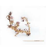 Scaping Twigs M 35-45cm No 1138