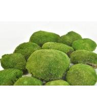 Ball Moss - Βρύα