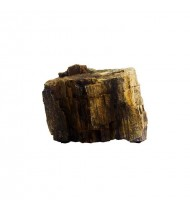 Fossilized Wood Stone