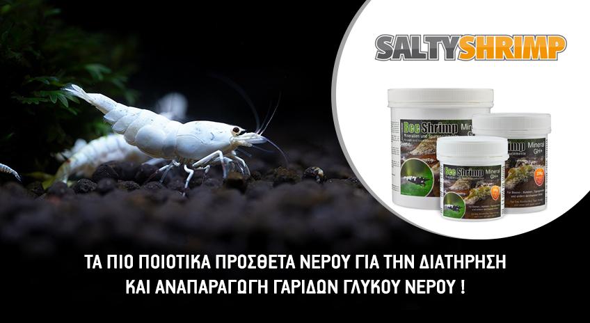 saltyshrimp